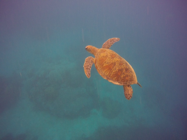 Friendly Cute Turtle